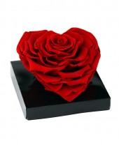 Rose rouge Éternelle Cœur