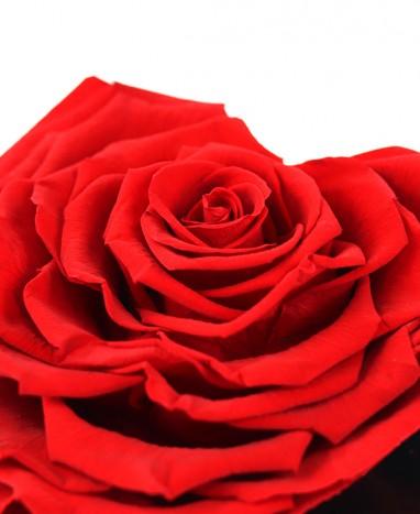 Rose rouge Éternelle Cœur XL - Max le Fleuriste - Livraison de fleurs à domicile - Max le Fleuriste