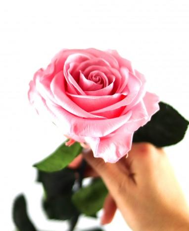 Rose Éternelle rose XL - Max le Fleuriste