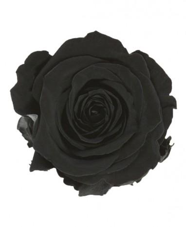 Rose Éternelle noire  - Max le Fleuriste