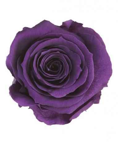 Rose Éternelle violette • Livraison de fleurs à domicile  - Max le Fleuriste