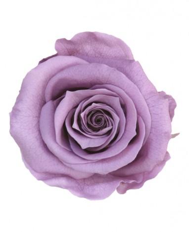 Rose Éternelle mauve • Livraison à domicile  - Max le Fleuriste
