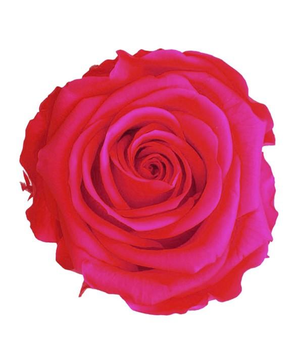 Rose Éternelle rose vif • Livraison à domicile